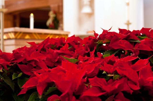 Pointsettias at Blessed Sacrament Church