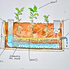 Vertical garden meets aquaponics for Landscape design courses sydney