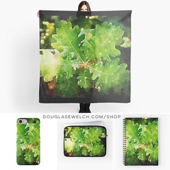 Dress up your day with these Oak Leaves Watercolor Scarves, iPhone Cases, Laptop Sleeves, Notebooks and More! Available only from http://ift.tt/2i1uX76 #oak #leaves #garden #trees #watercolor #nature #products #cards #clothing #arts #crafts #technology #i