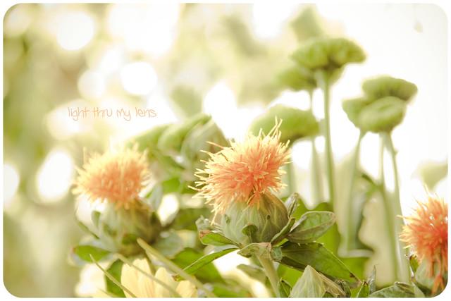 Flors pasteloses