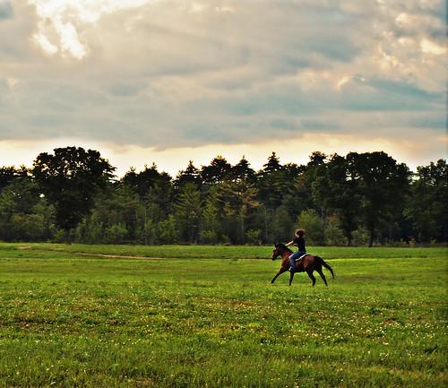 flowers sunset horse green clouds ma fast olympus palmer rider gallop f35 bondsville e420 zd1442mm burgundybrookfarm bluestarequiculture lightraysfield