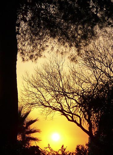 sunset españa sol arbol atardecer badajoz cielo puestadesol extremadura guareña cielosdeextremadura