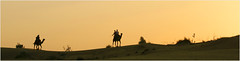 safari, thar desert