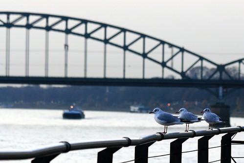 november sunrise germany geotagged deutschland colorful europa europe bokeh gulls cologne köln rhein sonnenaufgang 2009 rheinland möwen südbrücke