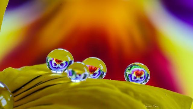 Drops macro-yellow