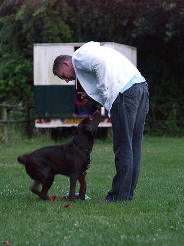 Canine Training With A Few Easy Tips 2