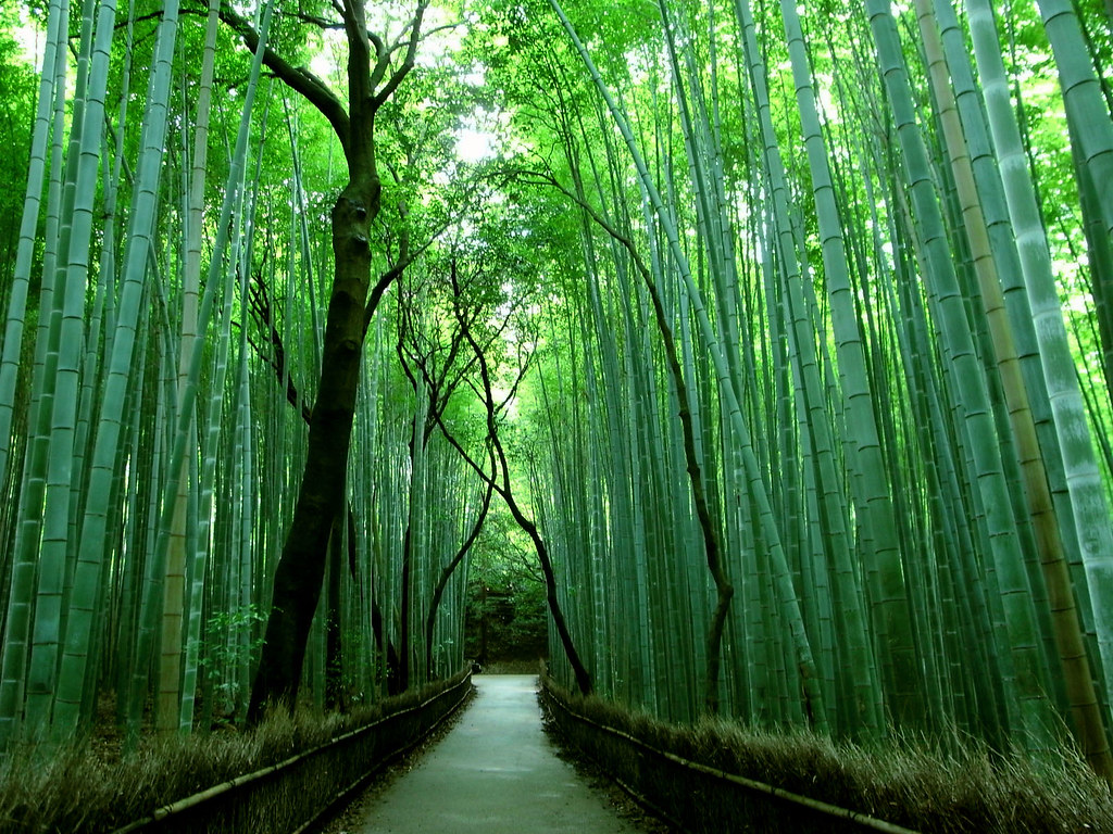 The Famous Bamboo Forest of Sagano «TwistedSifter