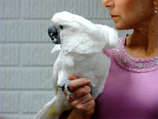 Denise Hamner with Parrot