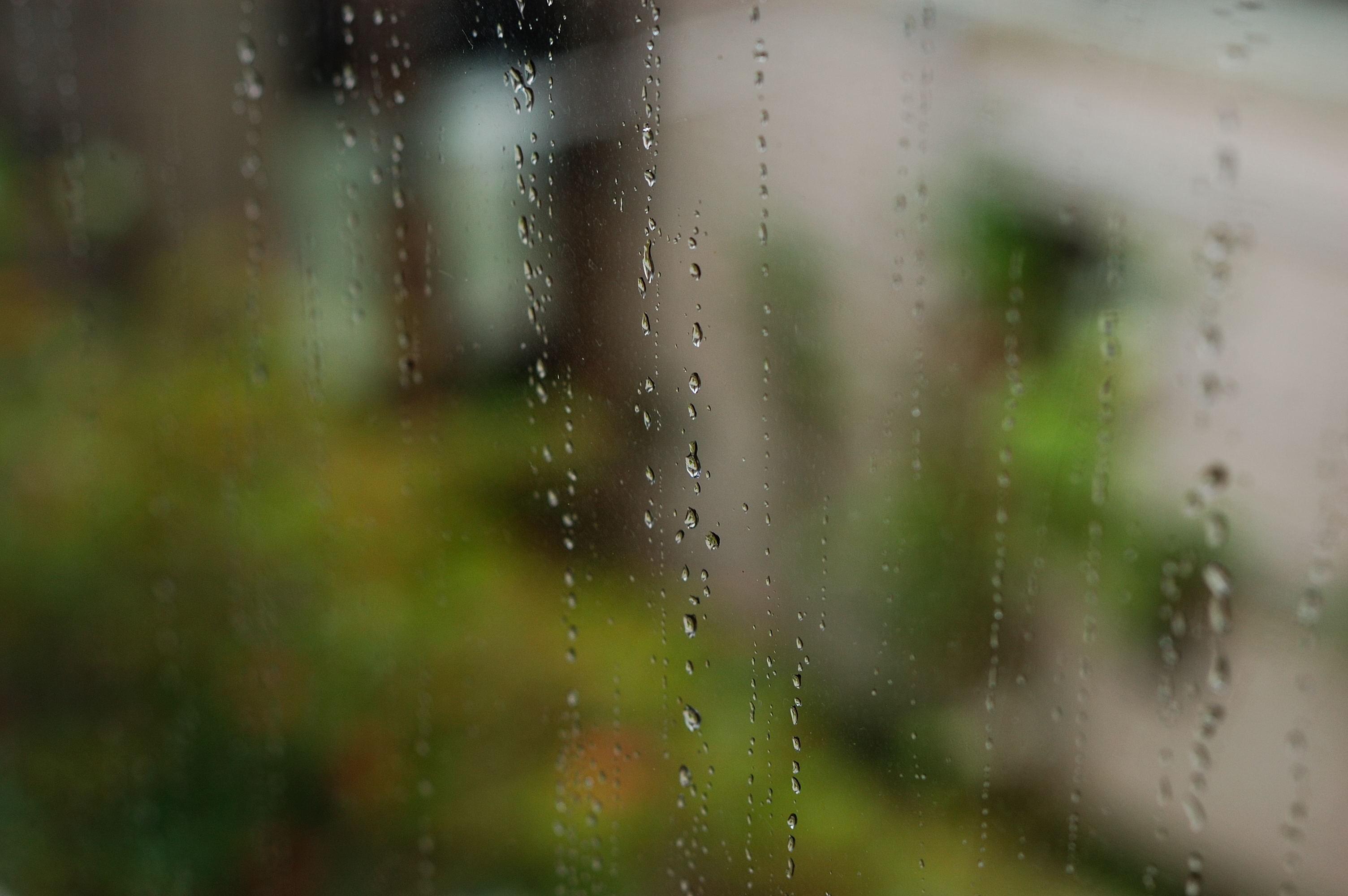 241/365: Raindrops