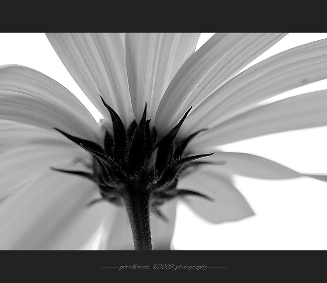 ~~~ flower~project~2009 ~~~