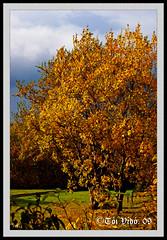 Haust .. Autumn ..  Fall