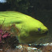 Green Moray - Photo (c) lotlhmoq, some rights reserved (CC BY-NC-SA)