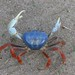Land Crabs - Photo (c) Lon&Queta, some rights reserved (CC BY-NC-SA)