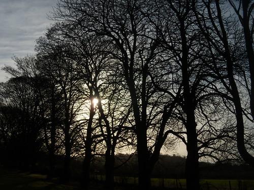 Trees, winter sun