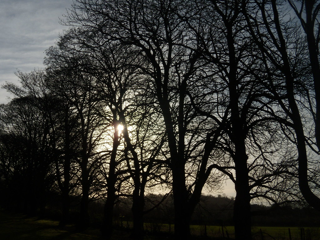 Trees, winter sun Little Kimble to Saunderton