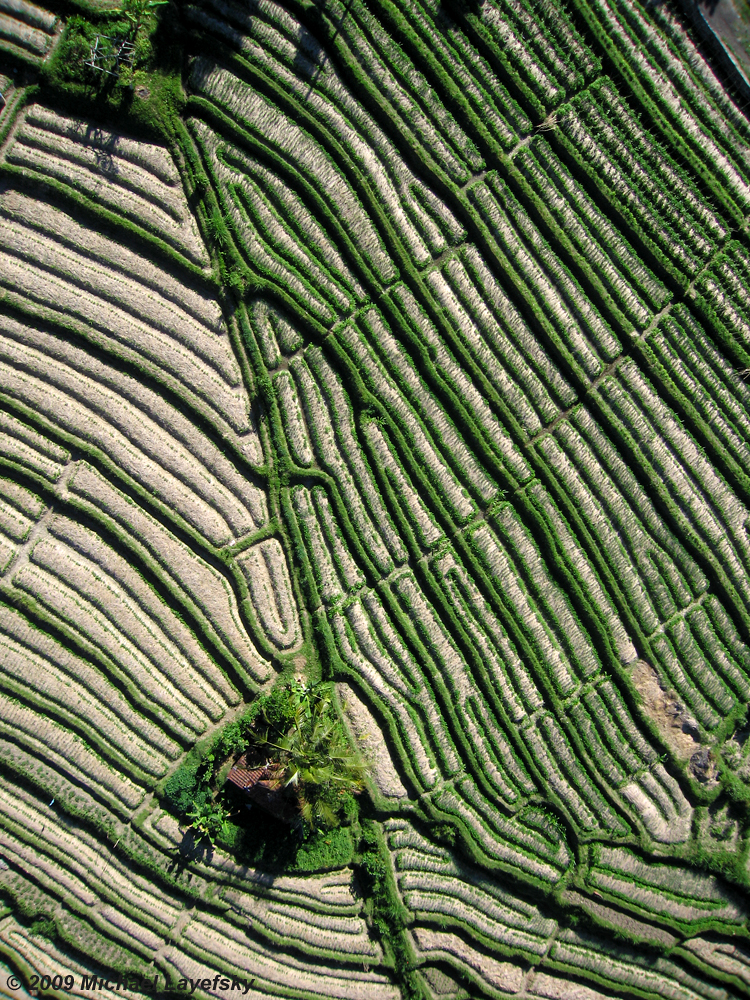 Rice terraces, Sideman, Bali