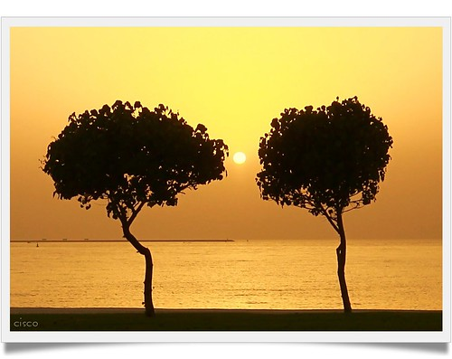 "trees sunset sun gold eau centro cisco abudhabi middle photographia worldwidelandscapes ""photographia"" saariysqualitypictures giugno2009 yourwonderland"