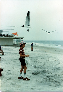 Ken beach seagull