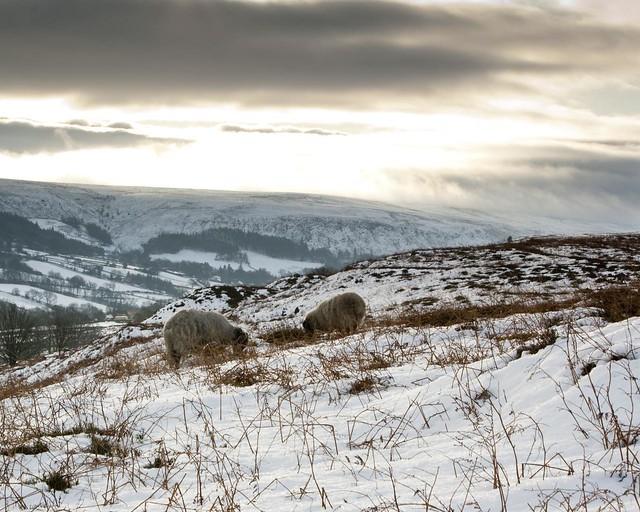 Castleton - North York Moors