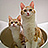 the Multiple Cats group icon