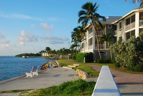 trees palm walkway fl sanibel captiva nikond80 southseasresort hgvc kstraw2