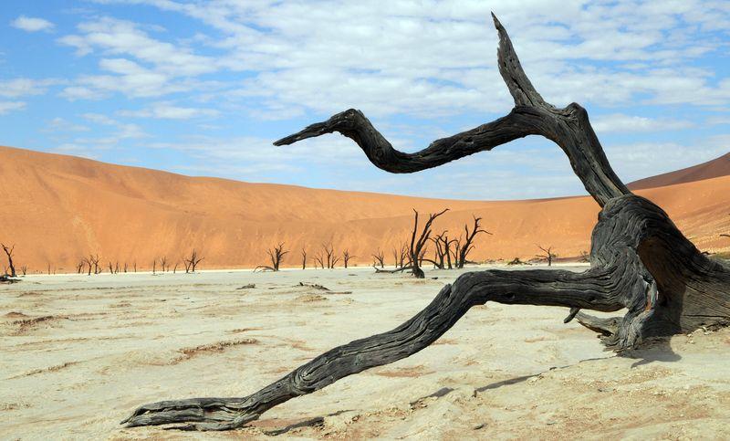 ナミブ砂漠で枯れ果てているアカシアの木