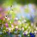 Essence of Summer XVII by Kelly Sereda