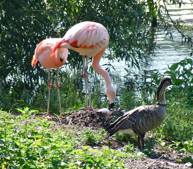 Flamingo nest - photo#18