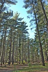 Tokai Forest