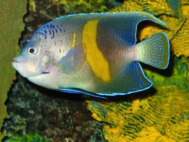 Saltwater fish houston tx fjw aquarium houston tx for Texas saltwater fish