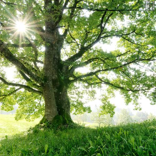 pandora the tree of soul large gregor halbwedl s photo flickr
