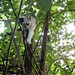 Small photo of Cats out of trees, that's a different story