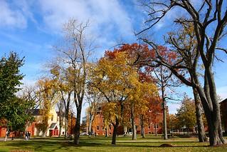 Dalton Hall & Dead Oak