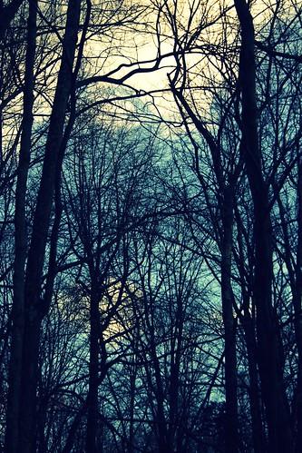 blue trees winter sky white project photo mac cross 365 process reddin edgedonkey