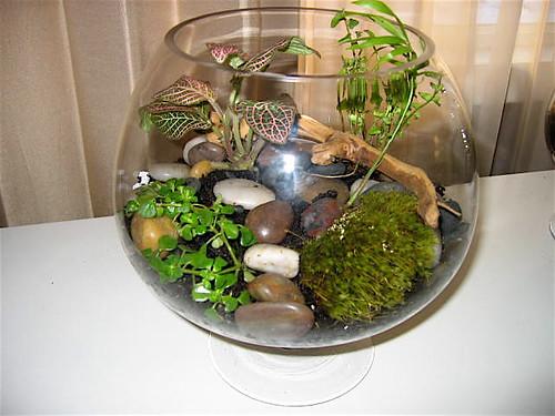 Warning my bumi green fish bowl terrarium for Small fish bowl filter