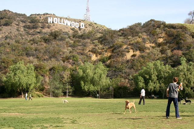 Dog Park Images
