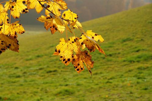 denmark nature october oktober canon appazphotography