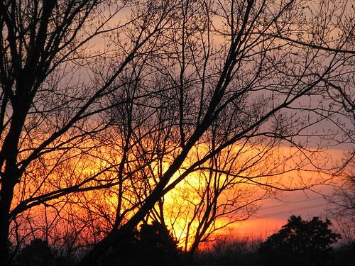 christmas trees sunset tn tennessee kingston