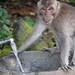 monkey forest ubud 22feb2017 20