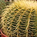 Small photo of Cactus