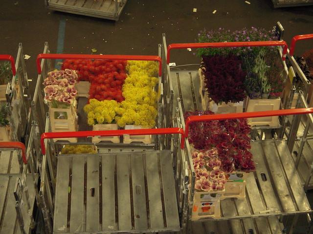 197 - Subasta de flores (Flora Holland)