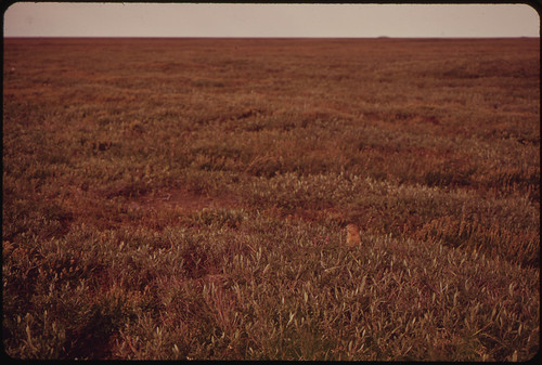 A Parka Squirrel in the Tundra 08/1973