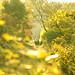 morning_shoot by kenicii