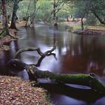 River Branch