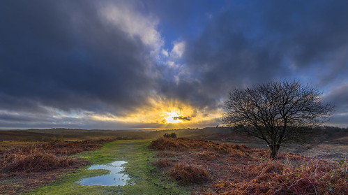 sun sunset tree branch twig water puddle bracken cloud grass heath heather landscape