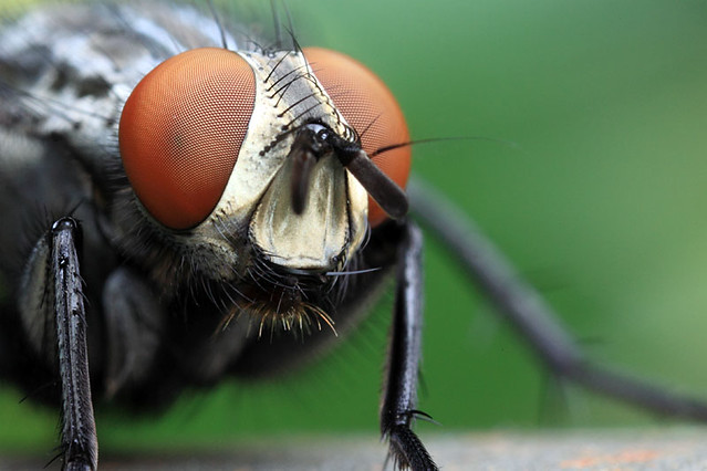 forth_of_d-fly-crop