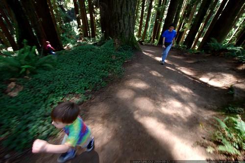 walking in the humboldt redwoods    MG 1053