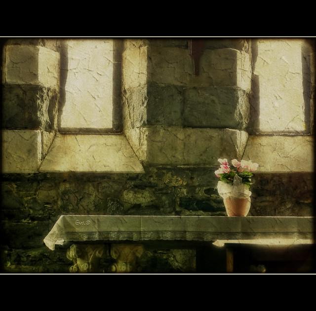 Ciclamini e altare