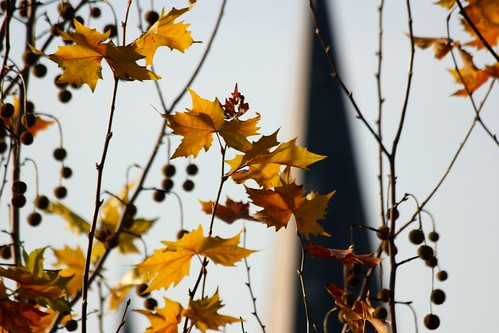 november sunrise germany geotagged deutschland colorful europa europe dof cologne köln rhine rhein sonnenaufgang 2009 rheinland stseverin challengeyouwinner bürgerhausstollwerk thechallengefactory