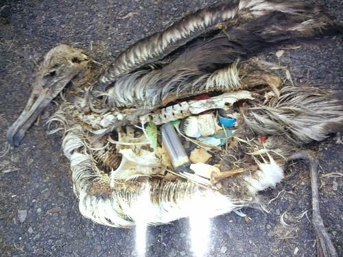 Dale Hoyland: Seabirds & plastic waste don't mix